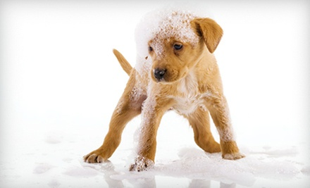 $10 for a Self-Wash For Your Dog  at Amore Petcare