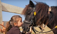 $10 for a Pony Ride at Greenlawn Equestrian Center