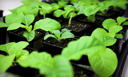 $15 for Intro or Advanced Indoor-Gardening Class and Organic Seeds at Root 66 Aquaponics Garden Shop