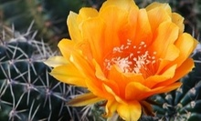 $9 for One Adult Admission at Desert Botanical Garden