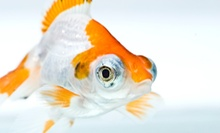 $10 for $20 Worth of Live Fresh Water Fish or Reptiles at Gills And Thrills Pet Shop