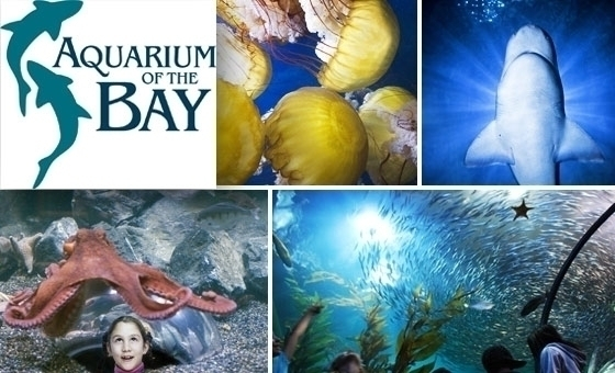 Located just steps away from San Francisco Bay, Aquarium of the Bay is home to over 20, animals that are found in the Bay and along the California coast. The 50,square-foot Aquarium features four main exhibit areas, each devoted to the diverse marine life and ecosystems of the San Francisco Price: $