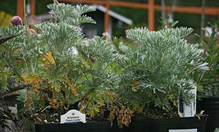 $15 for $30 Worth of Plant Materials at Covington Creek Nursery