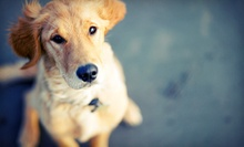 $55 for a One-Hour Private Dog Training Session at Let's Play
