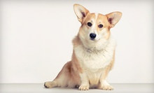 $15 for $20 Worth of Dog Bathing Services at Wags to Whiskers