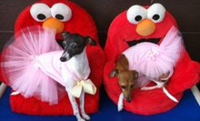 $20 for One Day of Tiny Tails Doggy Daycare for Dogs up to 20 Pounds at SpawZ Dog
