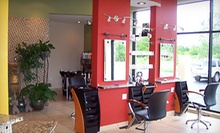 $55 for Organic Color and Haircut at Purity Day Spa & Salon