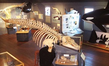 $6 for Two Adult Admissions at The Whale Museum