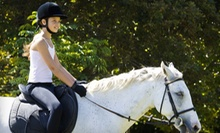 $66 for 1-Hour Private Weekday-Express Horseback-Riding Lesson at Traditional Equitation School