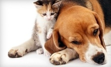 $25 for $50 Worth of Exams or Diagnostic Services at 43rd Ave. Animal Hospital