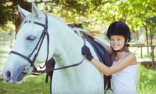 $40 for a 45-Minute Lesson and 45-Minute Trail Ride at Equestrian Enterprize