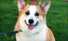 $10 for $20 Worth of Pet Daycare at Sonoran Desert Pet Resort