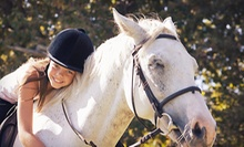 $12 for a 15-Minute Pony Ride at Starfall Ranch