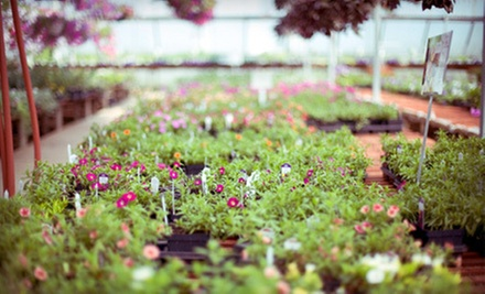 $25 for $50 Worth of Plants, Shrubs, and Trees at McAuslan's Nursery