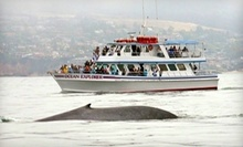 $16 for a Blue Whale Watching Cruise at 1 p.m. at Daveys Locker Whale Watching