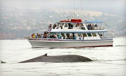 $16 for a Blue Whale Watching Cruise at 10 a.m. at Daveys Locker Whale Watching