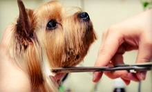 $26 for Dog or Puppy Bath with nail trim and ears cleaned,etc. at Pet Parade Animal Clinic