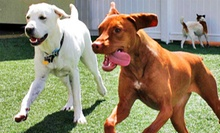 $25 for One Night of Dog Boarding at K9s Only