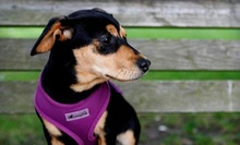 $20 for Nail Trim, Herbal Ear Wash and Teeth Brushing at Downtown Dog Lounge