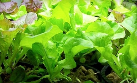 $125 for a 2-Hour Asexual Propagation-Plant Cloning Class (3-5 PM) at Technical Institute for Indoor Gardening