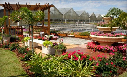 "$14 for Two 4"" Florida Sun Hostas at Knox Nursery"