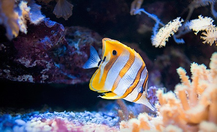 $25 for $50 Worth of Aquarium or Pond Supplies at The Sea Store