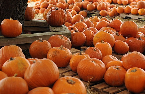 fall festivals  the 10 most unusual fests across the country