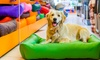 Up to 55% Off Daycare for a Dog at Preppy Pet