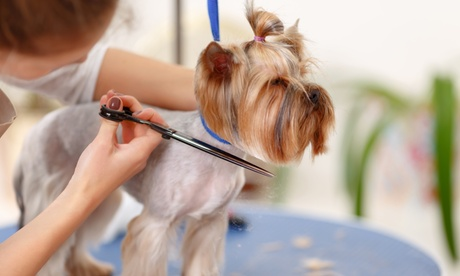 Up to 40% Off on Pet - Grooming / Salon at Passion Fur Pets Grooming