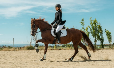 Up to 57% Off on Horse Back Riding - Training at Green Hill Show Horses