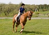 Up to 28% Off on Equestrian Experience at TA.Equestrian Academy