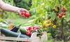15 kg di frutta e verdura km 0