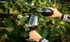 Up to 57% Off Niagara Wine Tour from Niagara Fun Tours