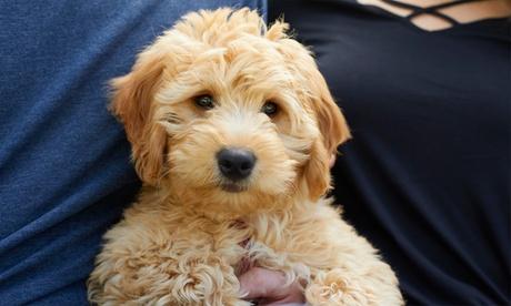 Sesión de peluquería para perros desde 16,95 € en Mister Pet Resort Oferta en Groupon