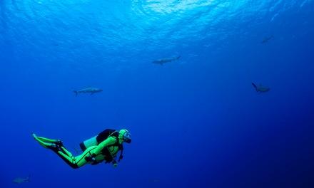 Corso di sub con immersione a 29,90€euro