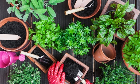 Curso online de diseño de jardines de 50 horas con Cursos Click (con 80% de descuento)