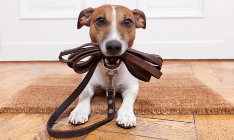 1 o 2 cursos online de cuidado de animales desde 8,95 € en Holly And Hugo