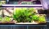 Up to 40% Off on Fish Tank Cleaning at J&Y Aquarium LLC