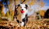 Up to 57% Off at Jermantown Animal Hospital