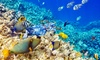 Up to 48% Off Midday Snorkel at Ocean Encounters