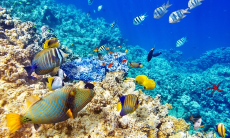 3-Hour Midday Snorkel Cruise for 1, 2, or 4 Adults, or 2 Kids and 2 Adults at Ocean Encounters (Up to 48% Off)