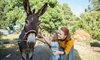 Up to 36% Off Admission to Charmingfare Farm