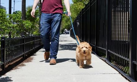 Houston Pet Grooming Deals In Houston Tx Groupon