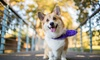 Up to 43% Off Spa Package for Dog at Lovely Paws Pet Grooming