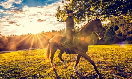 Passeggiata a cavallo, 60 minuti a 19,90€euro