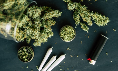 Online Cannabis Growology Course with Certificate for One or Two from Grow Cannabis School