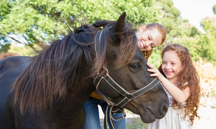 Hillside Shire Horse and Animal Sanctuary