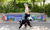 Up to 48% Off 30-Minute Dog Walks from Top Paws