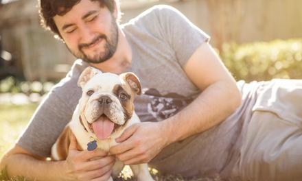 Estancia para 1 perro de 2, 5 o 7 días en Residencia Canina La Guardia (desde 66% de descuento)