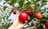 Curso online de plantas frutales